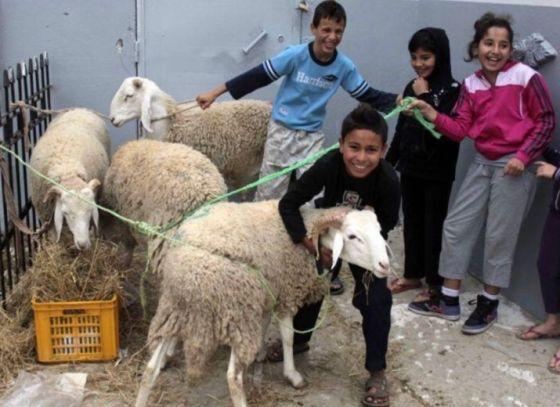 Tizi-Ouzou : des moutons pour les familles démunies