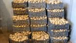 Lancement d'une opération de déstockage de pomme de terre