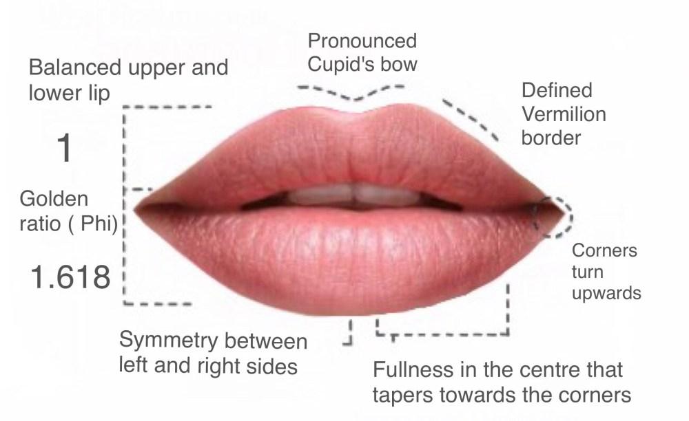 medium resolution of lip fillers hamilton luscious lips botox clinic hamilton lip to lip lip filler diagram