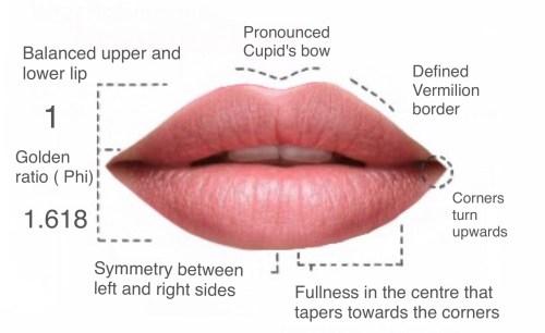 small resolution of lip fillers hamilton luscious lips botox clinic hamilton lip to lip lip filler diagram
