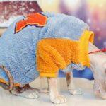 HCYD Vêtements d'hiver Chauds et épais pour Chats Vêtements pour Chats Sphinx L Jaune