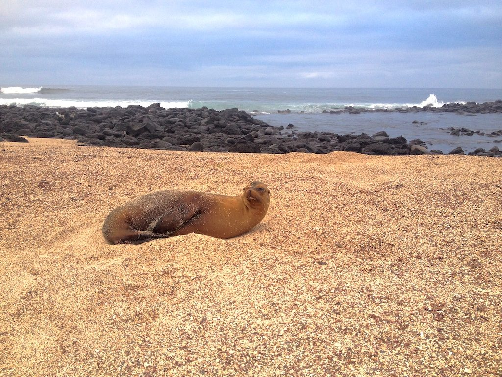 Lazy Sea Lion on San Cristobal