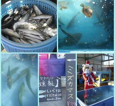 2016年最後の「地どれ魚直売会」本日開催しました。平塚の漁業PRキャラクター「ひらつかタマ三郎」もサンタのコスプレで登場!次回開催予定は1/27(金)です。