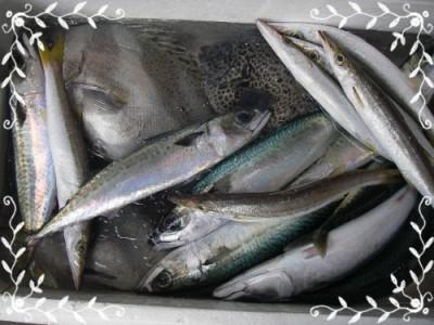 2012.10.17鮮魚パック