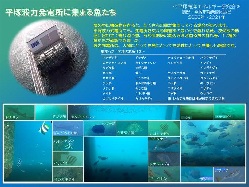 平塚波力発電所に集まる魚たちポスター