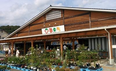 JAあつぎ夢未市でシラス商品の対面販売!鮮魚出荷はお休みです。