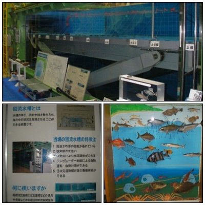 2012.5.18相模湾試験場