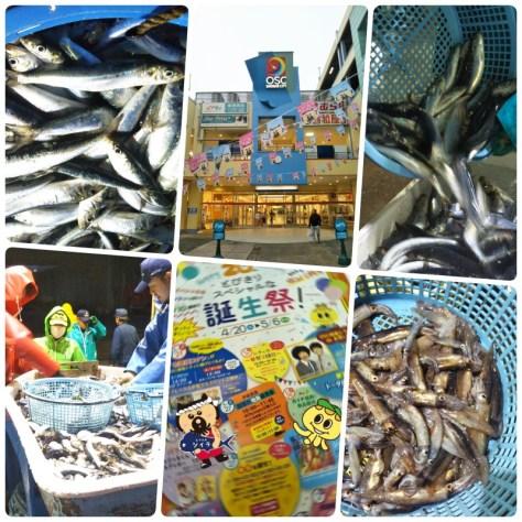 20190427OSC湘南シティ鮮魚販売