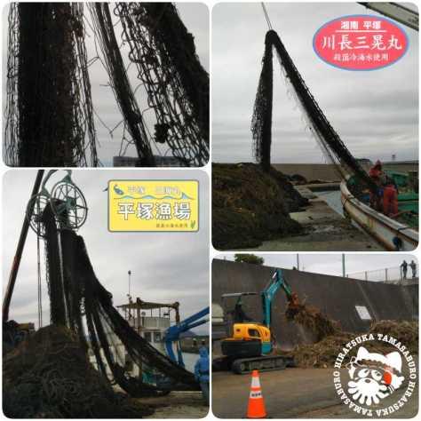 平塚漁港定置網台風19号復旧作業20191017