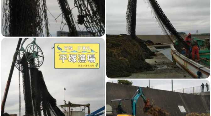 平塚漁港、定置網2ヶ統の状況です。