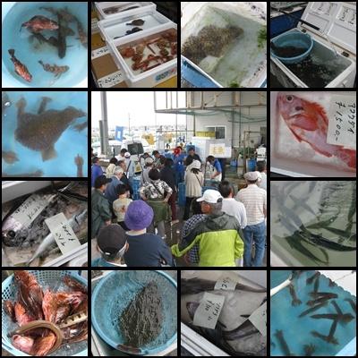 地どれ魚直売会20120525-1
