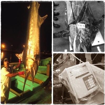 定置網漁業カジキマグロ