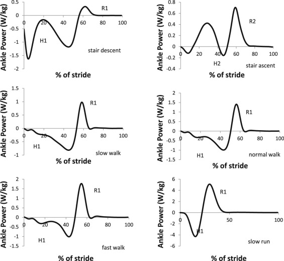 Dynamic Functional Stiffness Index of the Ankle Joint