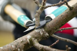 Why is It Important To Prune?