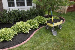 Plants You Can Plant Before The Ground Freezes