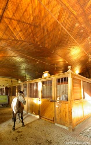 equestria2008_1
