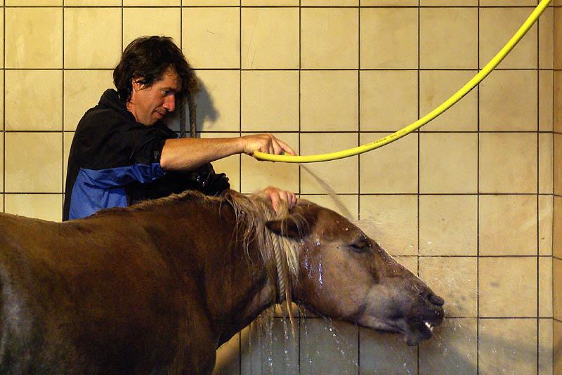 equestria2008_3