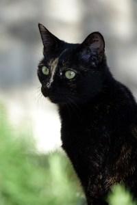 Katze, Šibenik, Krotien