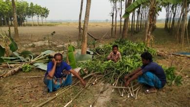 Photo of সাধুহাটিতে কৃষকের ১৫০টি আম গাছ কেটে দিয়েছে দূর্বৃত্তরা