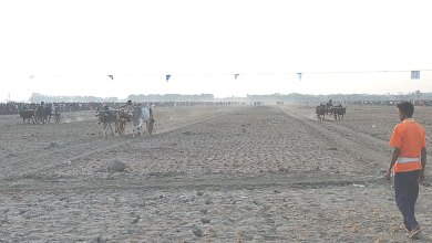 Photo of কালীগঞ্জে ঐতিহ্যবাহি গরুর গাড়ির দৌড় প্রতিযোগিতা
