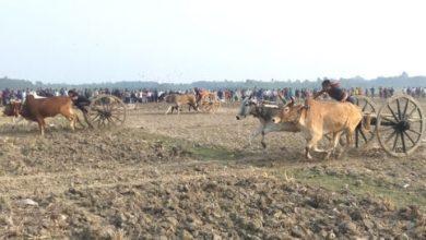 Photo of ঝিনাইদহে গ্রাম বাংলার ঐতিহ্যবাহী গরুর গাড়ির দৌড় প্রতিযোগিতা অনুষ্ঠিত