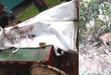 Photo of ঝিনাইদহে বাসের চাপ খেয়ে নিয়ন্ত্রণ হারিয়ে আলমসাধুর শ্রমিক নিহত
