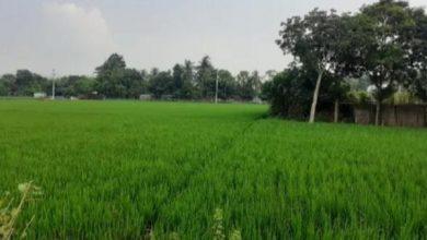 Photo of ধ্বংসের দ্বারপ্রান্তে ঝিনাইদহ হরিনাকুন্ড 'দিগনগর' পুরাকীর্তি