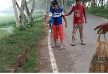 Photo of ঝিনাইদহে মাছ ধরার জালে আটকে গিয়ে ২টি বিলুপ্তপ্রায় প্রাণীর মৃত্যু