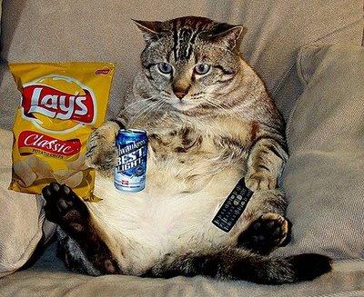 kitty couch potato j