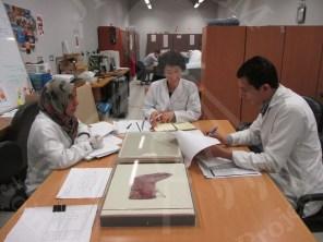 石井専門家とマウントの準備について議論する染織品チーム