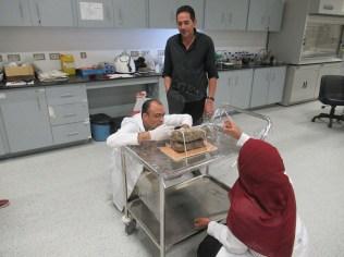 応急処置で使用する材料を決定する壁画チームのエジプト人専門家と日本人専門家