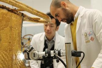 عملية تعريف الأخشاب باستخدام الميكروسكوب الإلكتروني