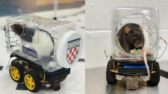potkan řídící auto