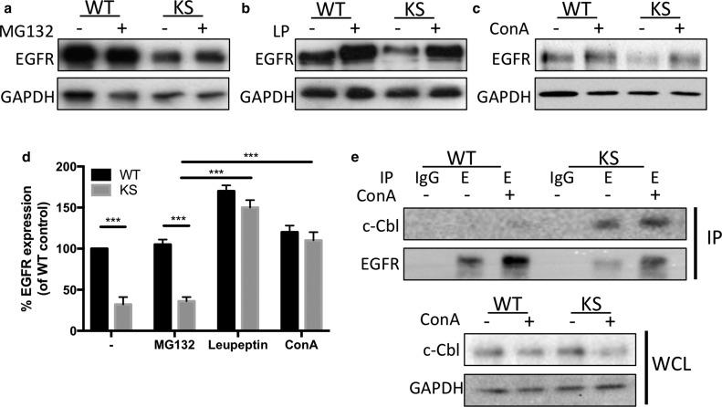 Kindlin-1 Regulates Epidermal Growth Factor Receptor