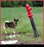 dogfirehydrant - online jigsaw puzzle - 42 pieces