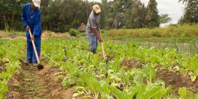 Farmers in Tanzania decry grim agriculture financing