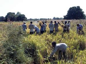 集約農業 - Intensive farming - JapaneseClass.jp