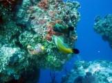 santarosa_fishes