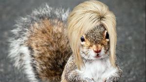 squirrel hair