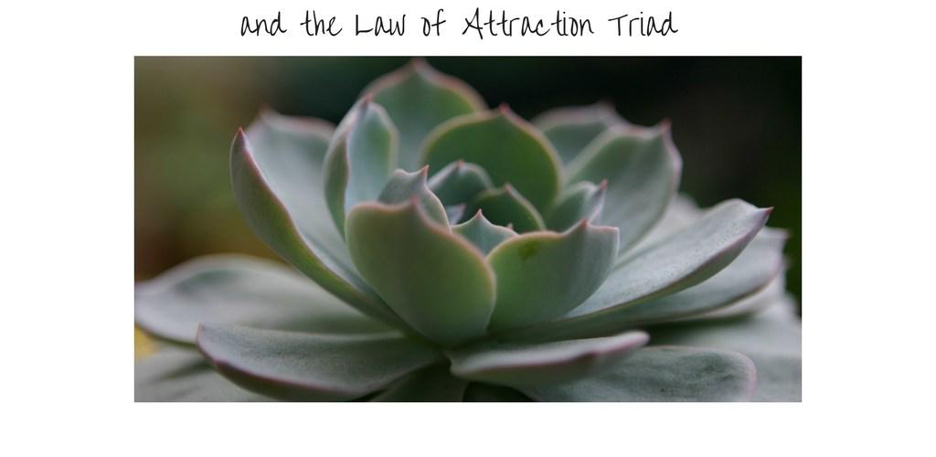 LawofAttraction, abundance, healing, selflove, energy, therapy, selfhelp, support