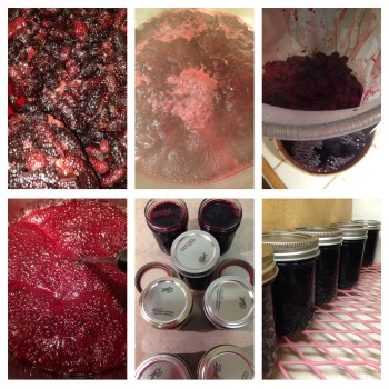 Mulberry Jelly