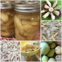 Pear Pickles