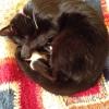Bridgwater Craft: Cat & Crochet