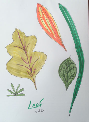 Real Life: Leaf drawing