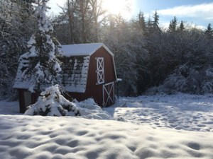 Fiber Dreams: The barn in snow