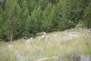 Yarn Fiber Processing: Mountain Meadow Wool