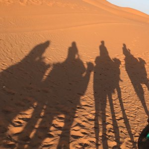 Recounting: Camel & riders shadow in Sahara
