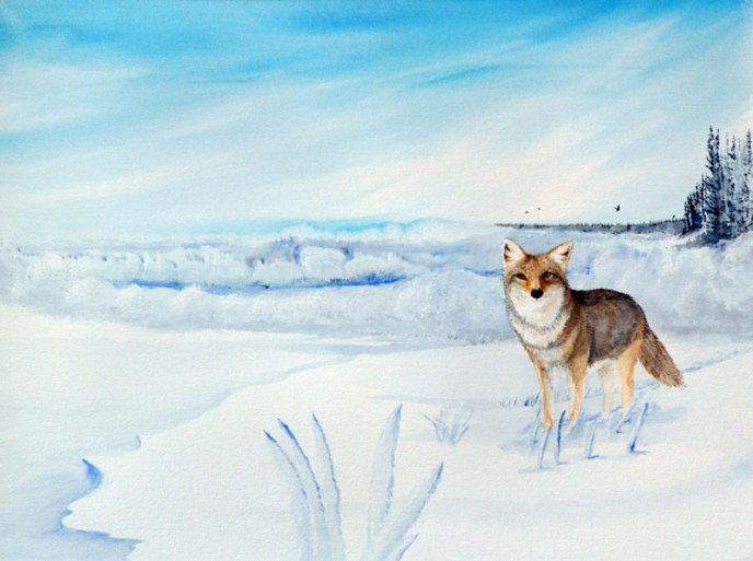 A fox steps out onto a snow bank, during a morning hunt on a bright winter's day.