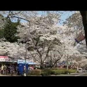 『北海道札幌市北区』の動画を楽しもう!