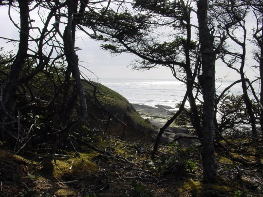 Yachats Trees Photo